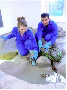 Animal Care students with terapins