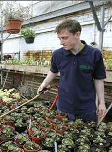 Horticulture student watering plants