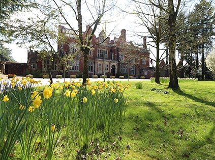 the college from the perspective of daffodils
