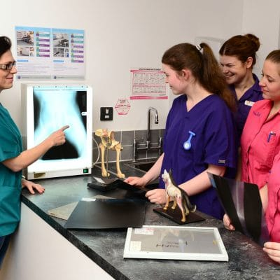 animal management looking at x ray