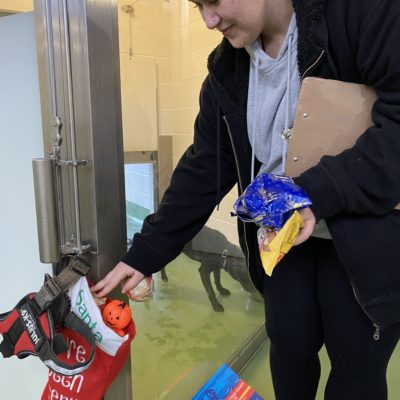 Student filling stocking for dog